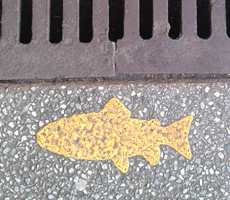 Salmon painting on storm drain
