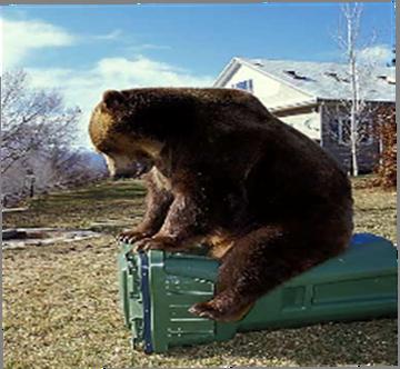 Bear-Resistant Organics Tote & Bear 2